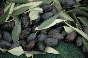 Rohkost Oliven